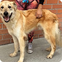 Adopt A Pet :: JOSHUA (video) - Los Angeles, CA