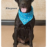 Adopt A Pet :: Khayman - Towson, MD