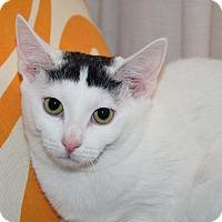 Adopt A Pet :: Bo & Blaze - Bristol, CT