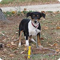 Adopt A Pet :: ZURI - Hartford, CT