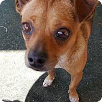 Adopt A Pet :: Aston! - New York, NY