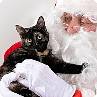Adopt A Pet :: Bea - Sanford, NC