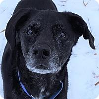 Adopt A Pet :: Zeus - Grayslake, IL