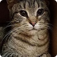 Adopt A Pet :: Mallory - Colfax, IA