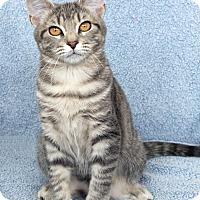Adopt A Pet :: Ilsa - St Louis, MO