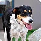 Adopt A Pet :: Zellie