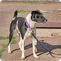 Adopt A Pet :: D'Beau - Scottsdale, AZ
