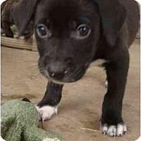 Adopt A Pet :: Venti - Phoenix, AZ
