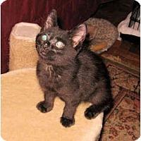 Adopt A Pet :: Dewey - Colmar, PA