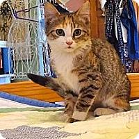 Adopt A Pet :: Thelma - St. Louis, MO
