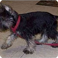 Adopt A Pet :: Hans - Dayton, OH