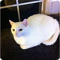 Adopt A Pet :: Cracker - Saint Albans, WV