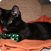 Adopt A Pet :: Memphis - Clearfield, UT