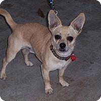 Adopt A Pet :: Victor - San Jose, CA