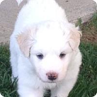 Adopt A Pet :: Dillon - Greeley, CO