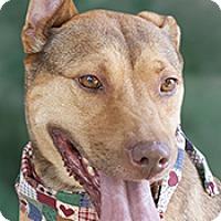 Adopt A Pet :: Grace - Cincinnati, OH