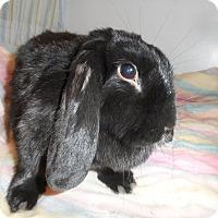 Adopt A Pet :: Guinness - Conshohocken, PA
