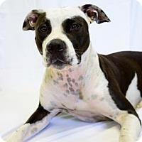 Adopt A Pet :: Peggy - Bradenton, FL