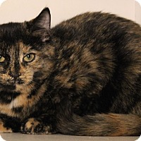 Adopt A Pet :: Sabrina - Middletown, CT