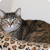Adopt A Pet :: India - Ann Arbor, MI