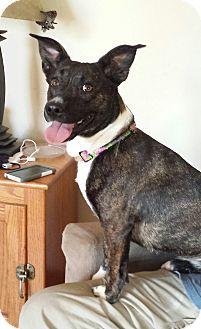 Adopt A Pet :: Cali  - Snow Hill, NC