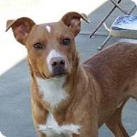 Adopt A Pet :: Kairo - Lincolnton, NC