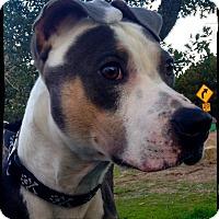 Adopt A Pet :: Buttons - Johnson City, TX