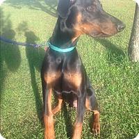 Adopt A Pet :: Anubis - Daleville, AL