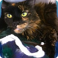Adopt A Pet :: Meow Meow - Webster, MA