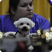 Adopt A Pet :: Gracie Allen - Abrams, WI