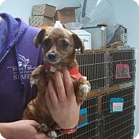 Adopt A Pet :: Dixie - Ottawa, KS