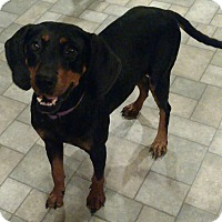 Adopt A Pet :: Arizona - Richmond, VA