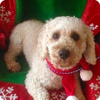 Adopt A Pet :: ANDRE - Santa Monica, CA