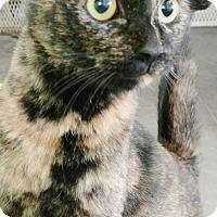 Adopt A Pet :: Patches - Odessa, TX