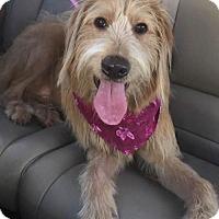 Adopt A Pet :: Bella - Spring Lake, NJ