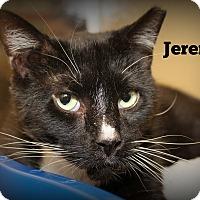 Adopt A Pet :: Jeremy - Springfield, PA