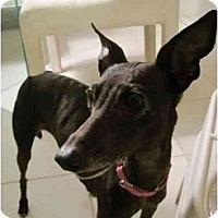 Adopt A Pet :: Lexi - Chagrin Falls, OH