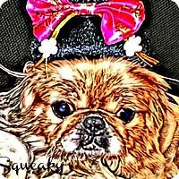 Adopt A Pet :: Squeaky-VA - Mays Landing, NJ