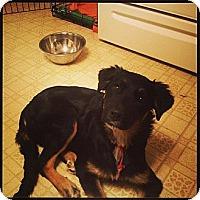 Adopt A Pet :: REBA! - Hancock, MI