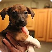 Adopt A Pet :: Olivia Gracie Maddie - Marlton, NJ
