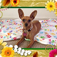 Adopt A Pet :: Cherry - Oceanside, CA