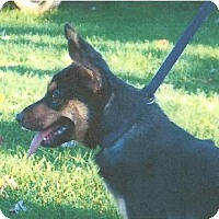 Adopt A Pet :: Pepper - Harrisonburg, VA