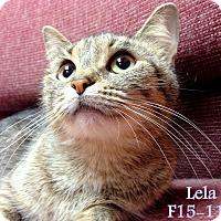 Adopt A Pet :: Lela - Tiffin, OH