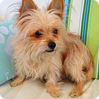 Adopt A Pet :: Zoe - Fennville, MI