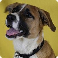 Adopt A Pet :: Willow - Minneapolis, MN