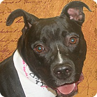 Adopt A Pet :: Dojo - Cincinnati, OH