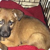 Adopt A Pet :: Mario - Houston, TX