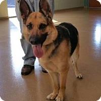 Adopt A Pet :: Sweet Lola - Hillside, IL