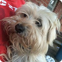 Adopt A Pet :: Lamar - Rocky Mount, NC