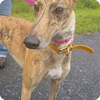 Adopt A Pet :: Jazzy - Harrisburg, PA